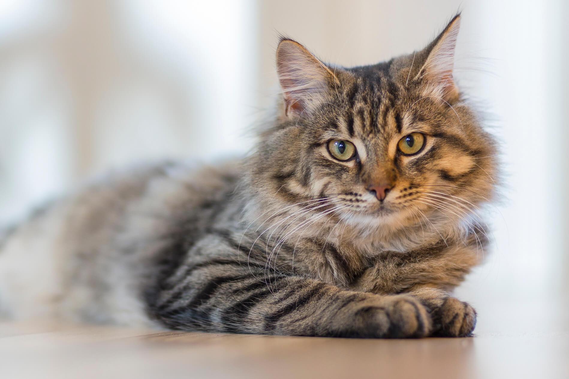 Pet Teraphy come curare un gatto stressato 2017-04-11