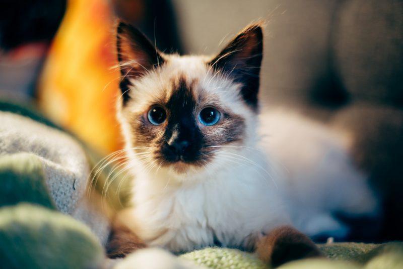 Quando vaccinare un gatto