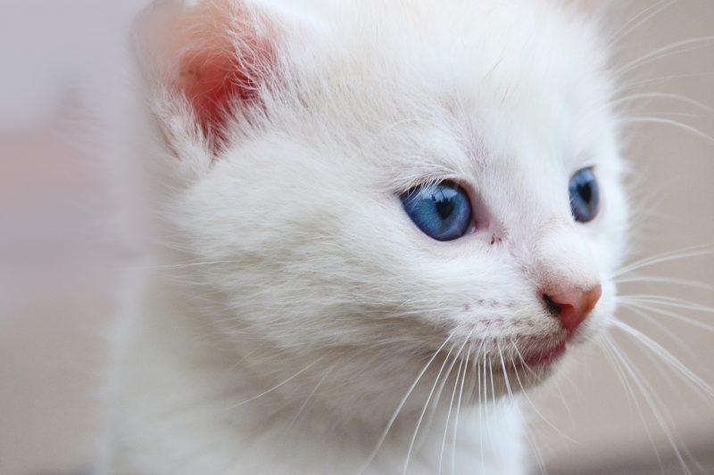 come-svezzare-un-gattino