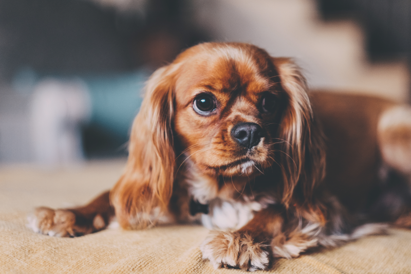 cosa-fare-se-il-cane-ha-paura-del-veterinario