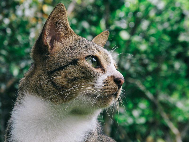 dieta-senza-glutine-per-cani-e-gatti