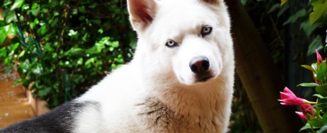 ecco-perche-non-dare-i-nostri-avanzi-al-cane