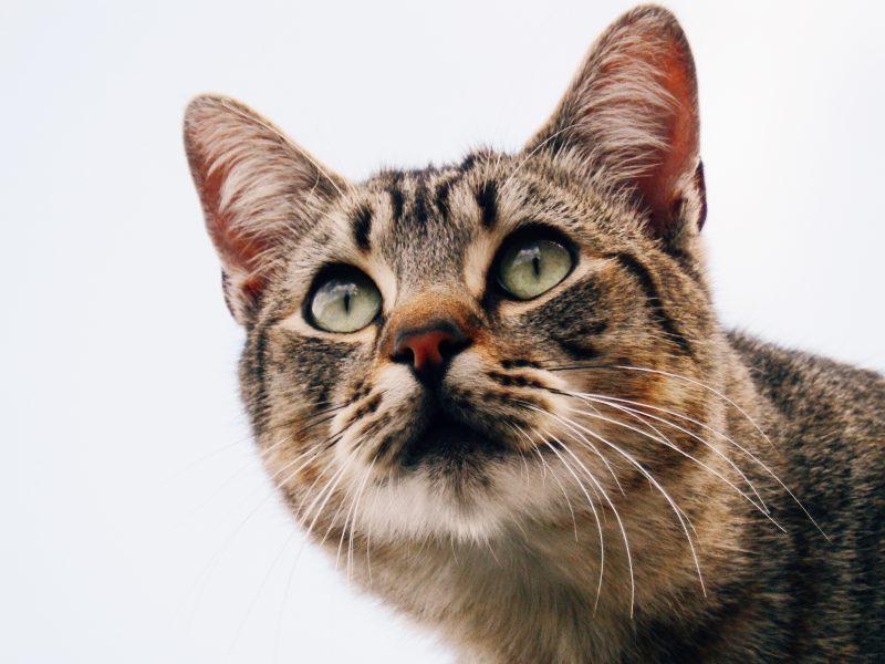cibo-ipoallergenico-gatto