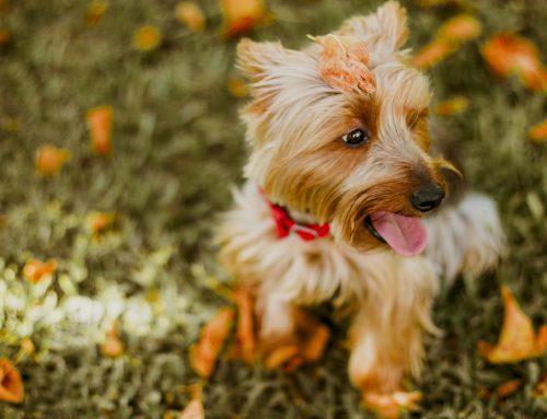 I 10 alimenti nocivi per il cane da non somministrare assolutamente