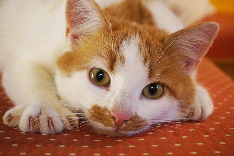 come-introdurre-nuovi-marchi-nella-dieta-del-gatto