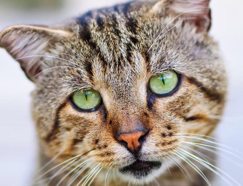 Come prevenire il raffreddore nel gatto