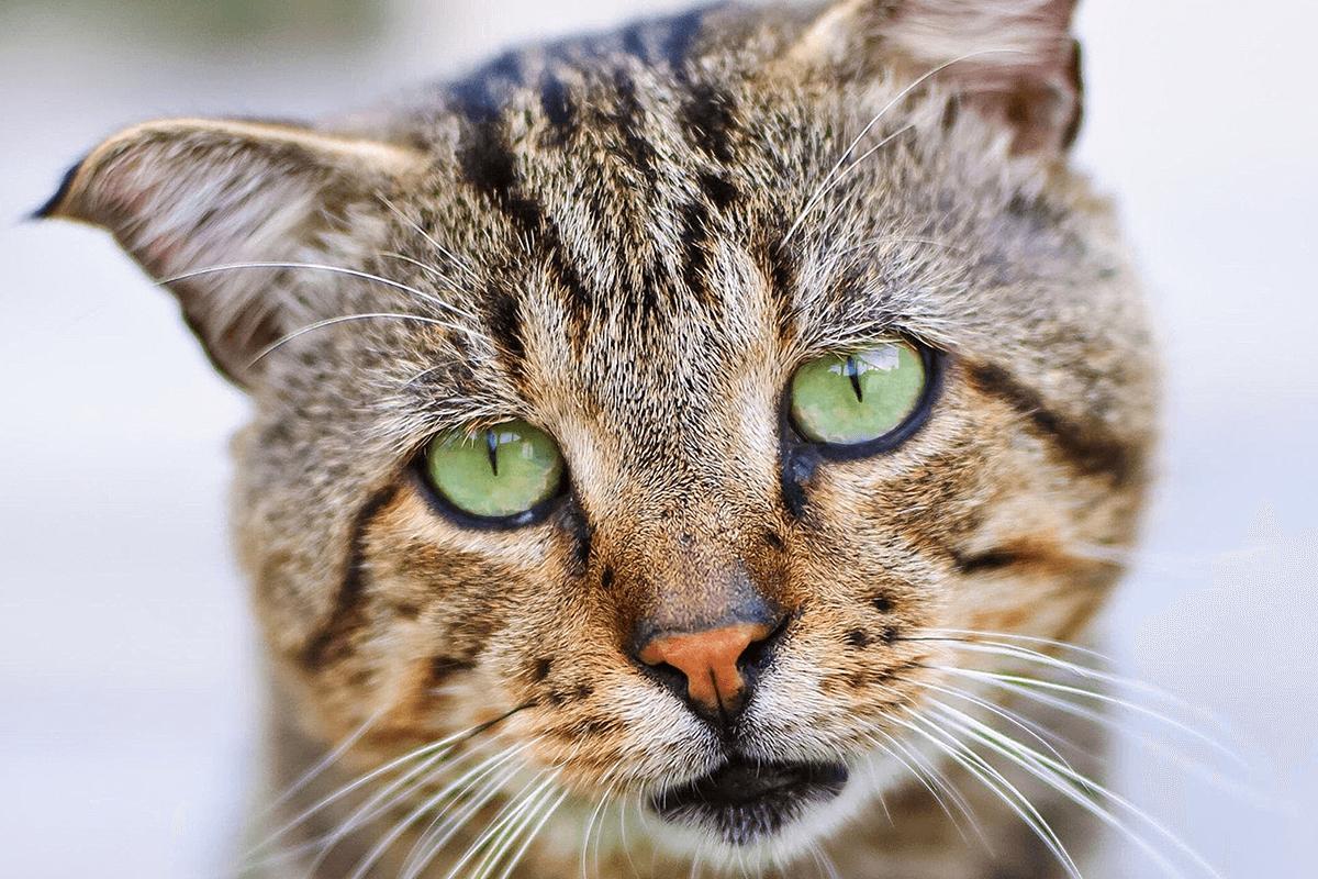 come-prevenire-il-raffreddore-nel-gatto
