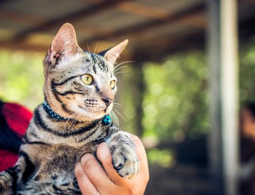 I benefici di avere un gatto nella propria vita