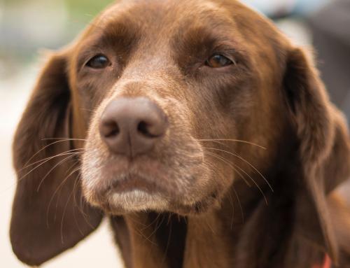 I bisogni di un cane anziano
