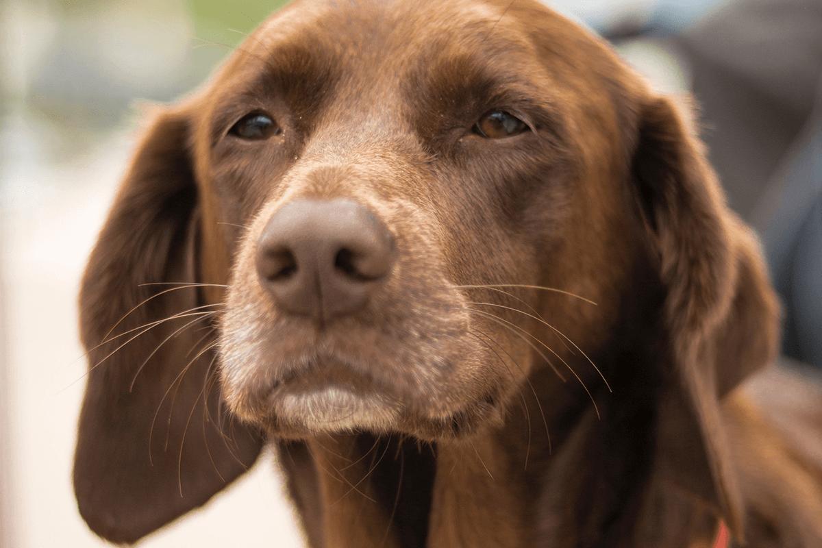 i-bisogni-di-un-cane-anziano