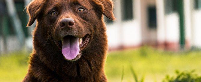 cane con meteorismo intestinale