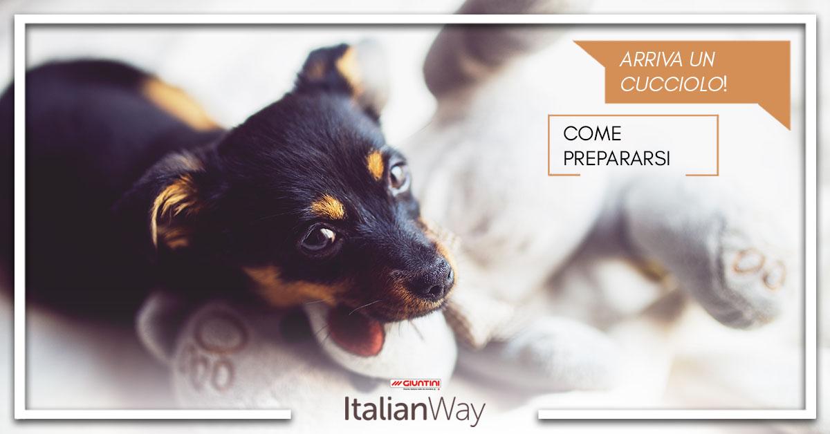 Cosa non pu mancare in casa per un cucciolo di cane italianway - Cosa non deve mancare in casa ...