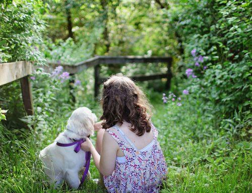 Quali sono i cani più adatti alla Pet Therapy?