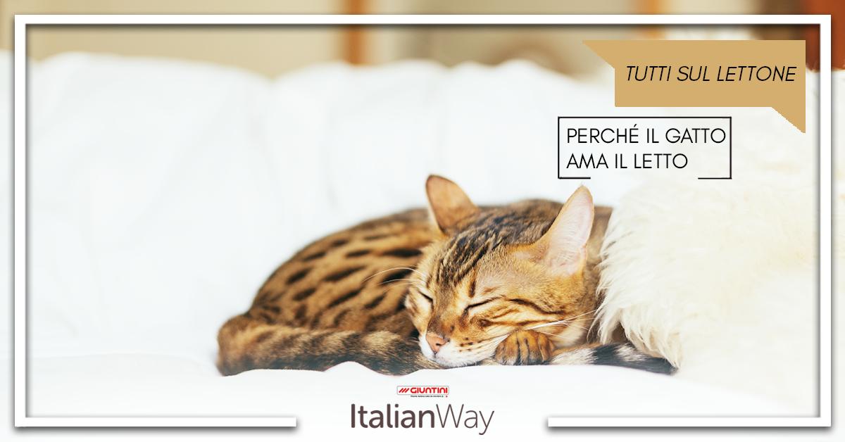 Perch il nostro gatto ama dormire sul nostro letto italianway - Perche i gatti fanno la pipi sul letto ...