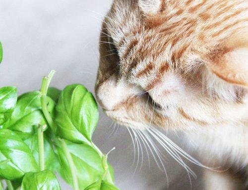 I cinque modi per far dimagrire il nostro gatto
