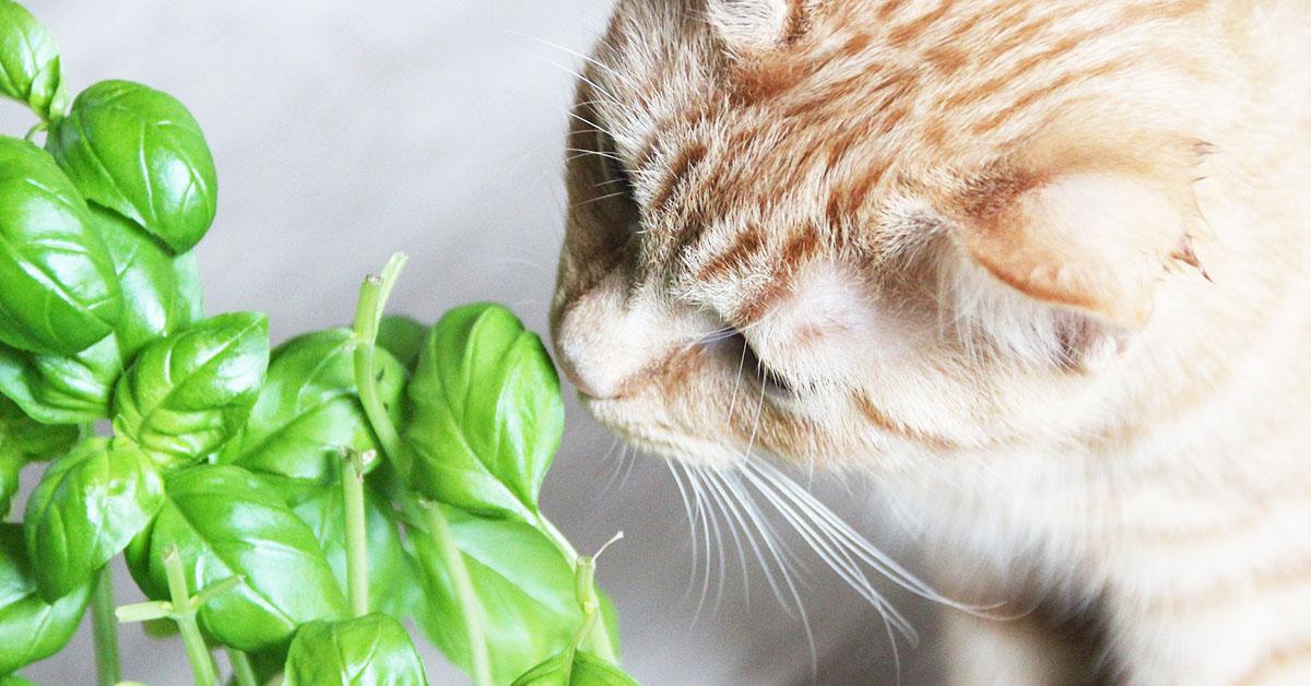 Gatto- I 5 modi per far dimagrire il nostro gatto