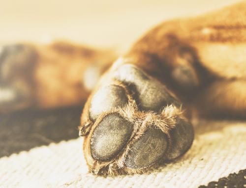 Asfalto bollente: come proteggere le zampe del cane d'estate