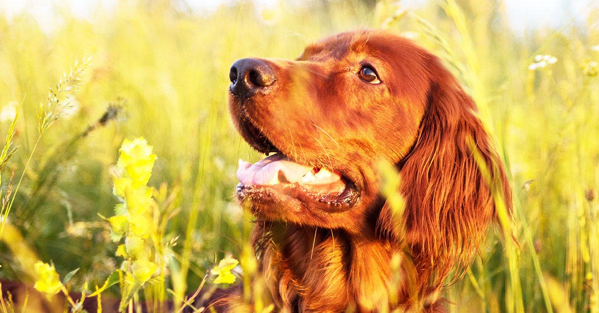 Come rinfrescare il cane d'estate