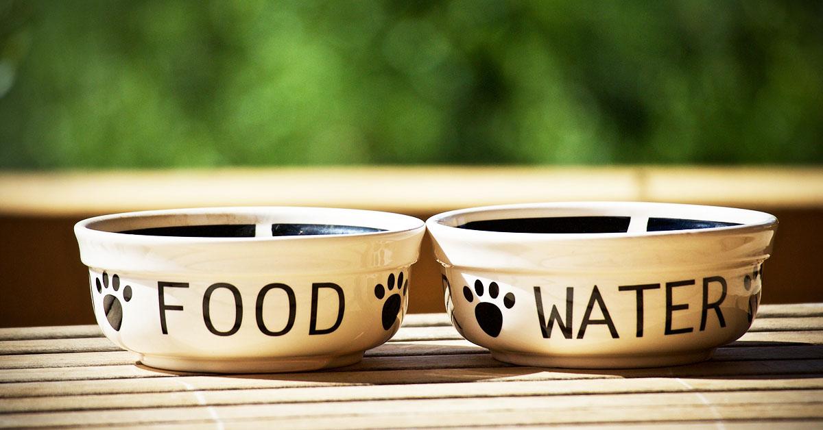 Alimenti grain free nella dieta di cani e gatti