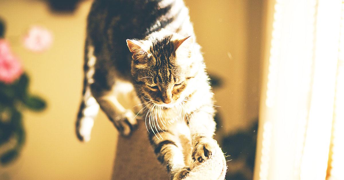 Come fare con il gatto quando andiamo in vacanza
