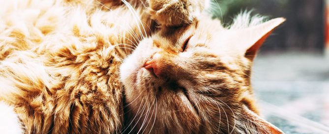 D'estate il gatto perde pelo? Ecco i nostri consigli