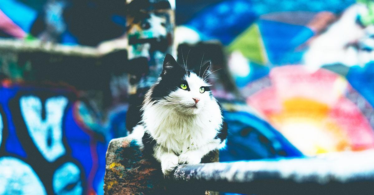 Cosa fare quando si vuole adottare un gatto randagio