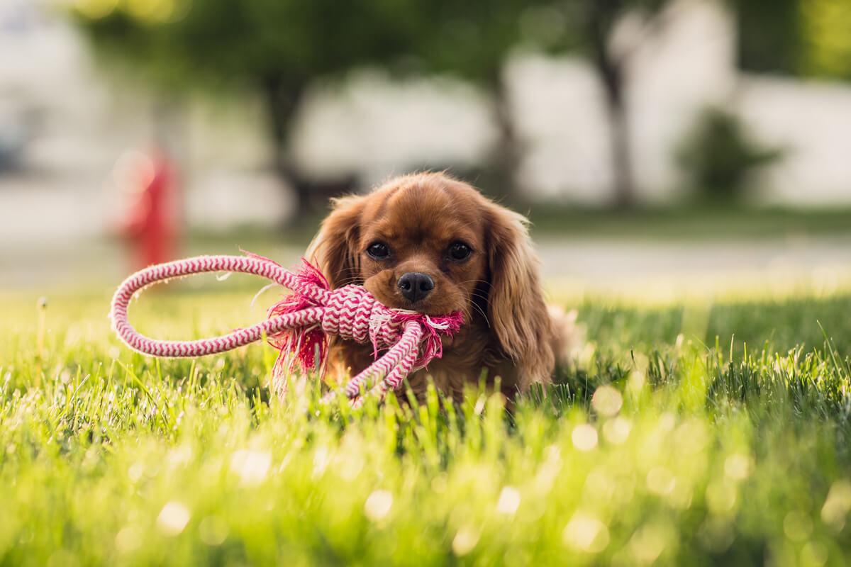Come-scegliere-i-croccantini-migliori-per-il-cane