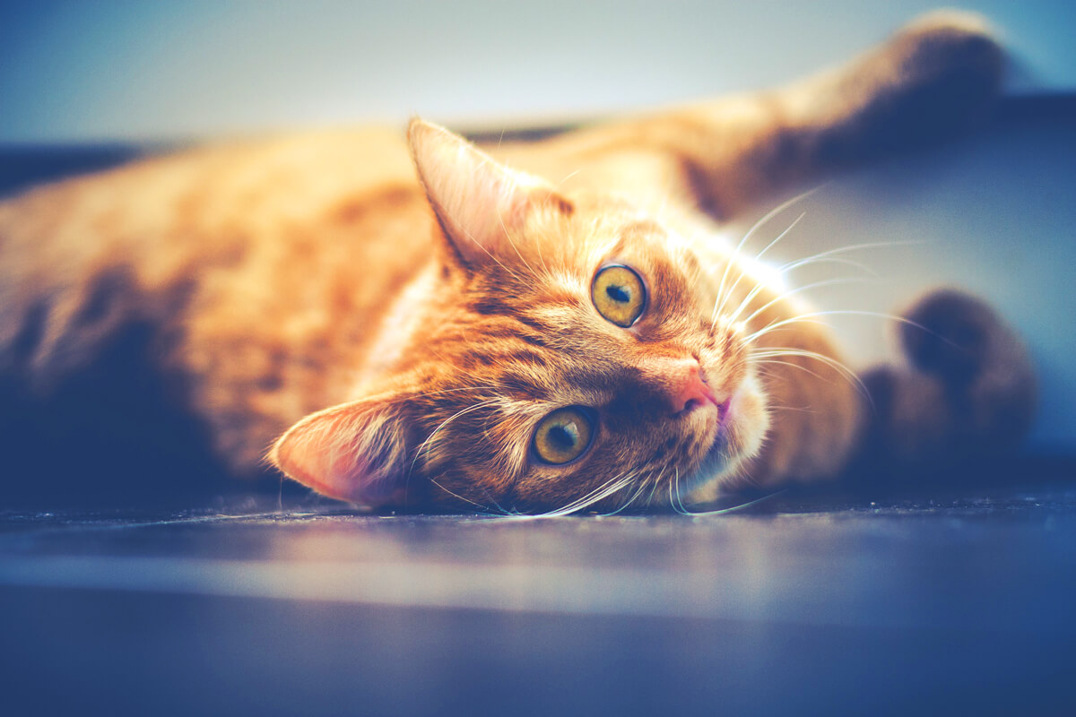 Consigli-di-dieta-per-gatti-delicati