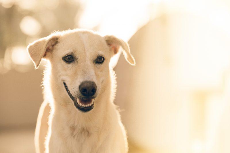 I sintomi del cane stressato