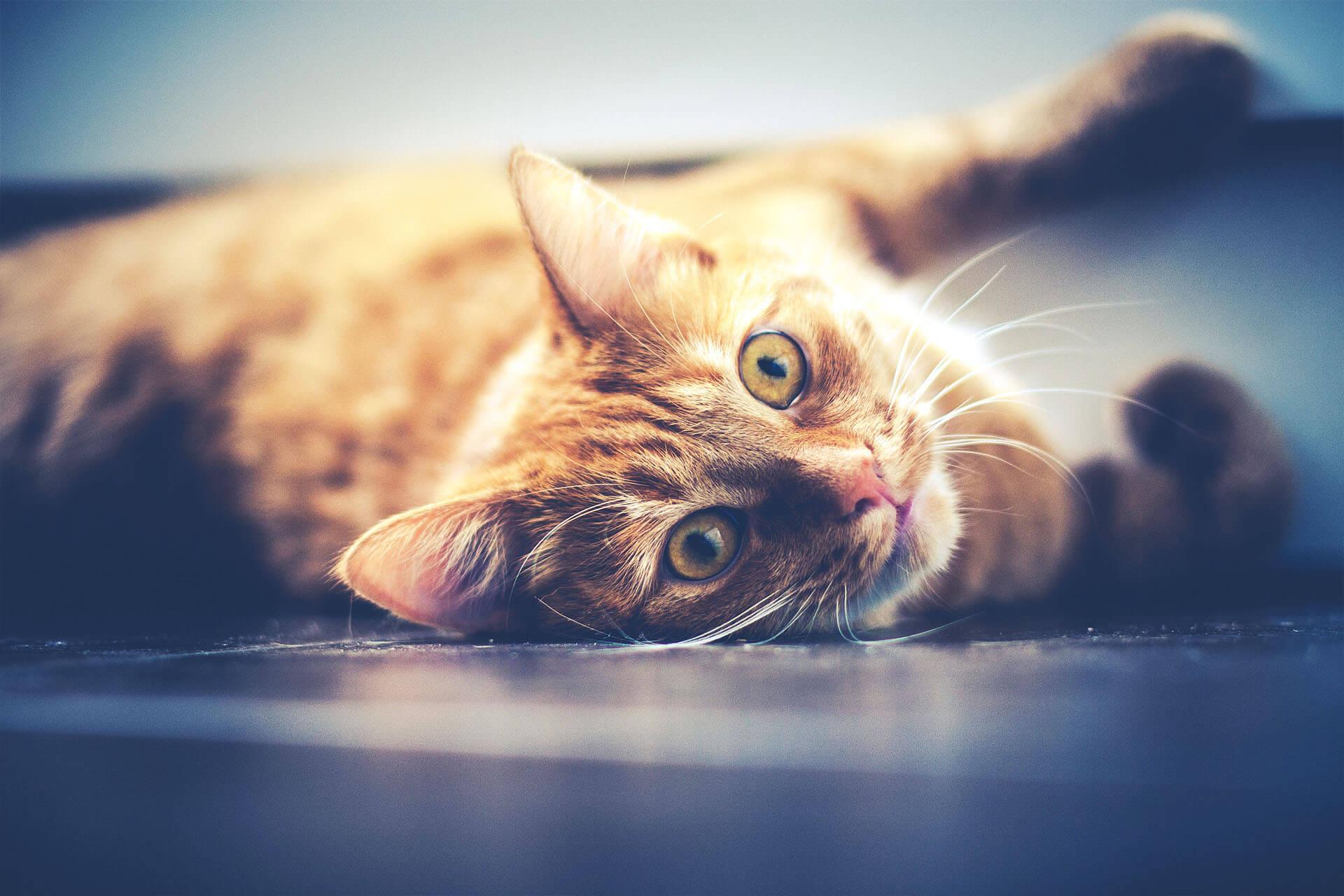 Umido | Linea gatto