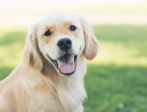 ItalianWay Pet lancia la nuova linea di cibo umido per cani e per gatti