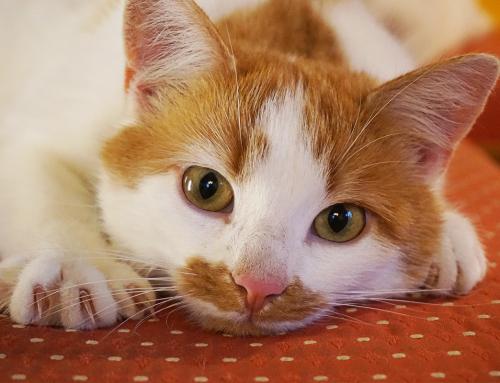 Come dare nuovi marchi di crocchette al gatto