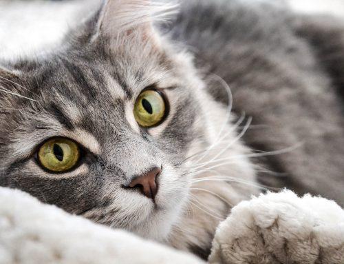 Come aiutare cani e gatti durante i botti di Capodanno
