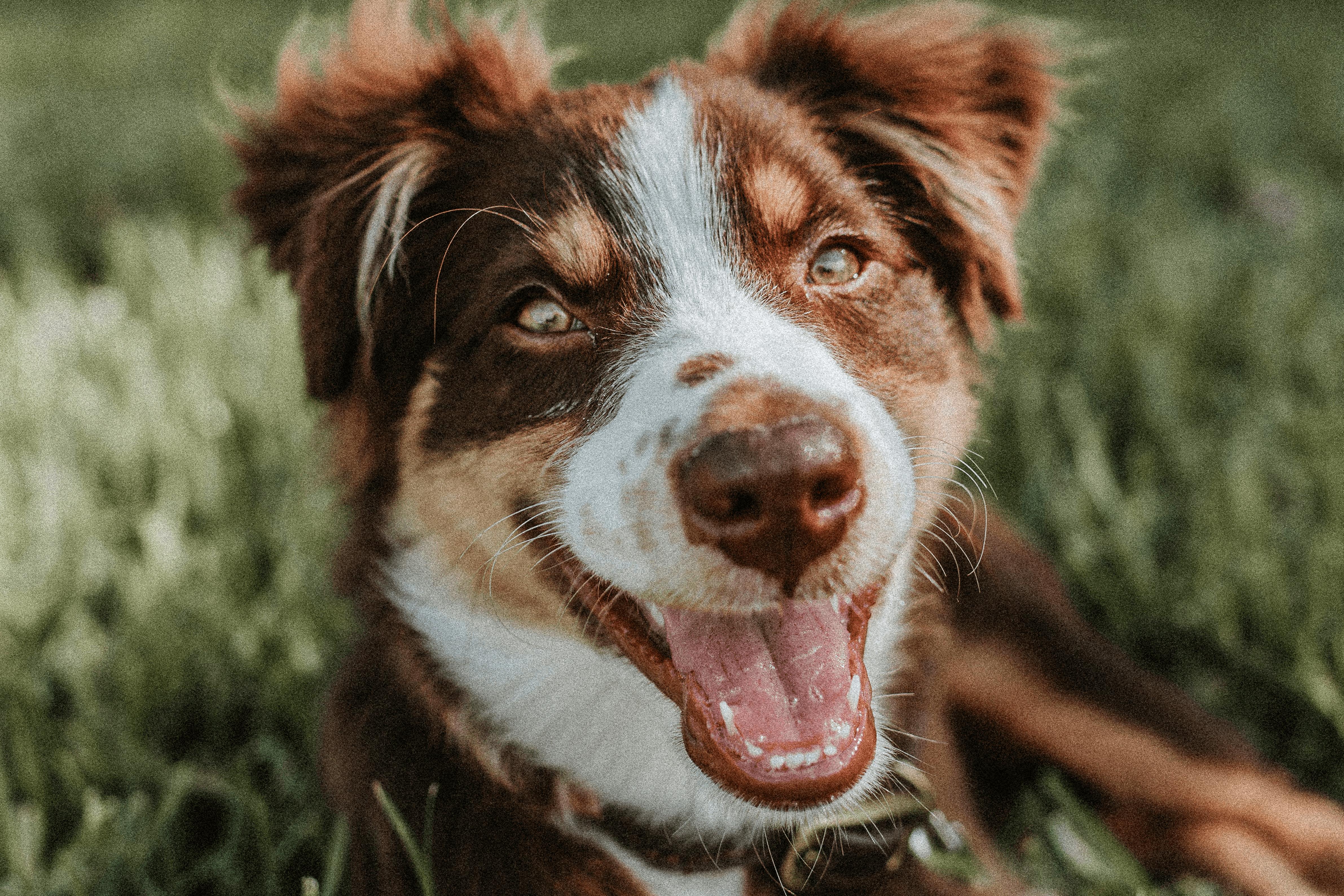 come-prendersi-cura-dei-denti-del-cane-min