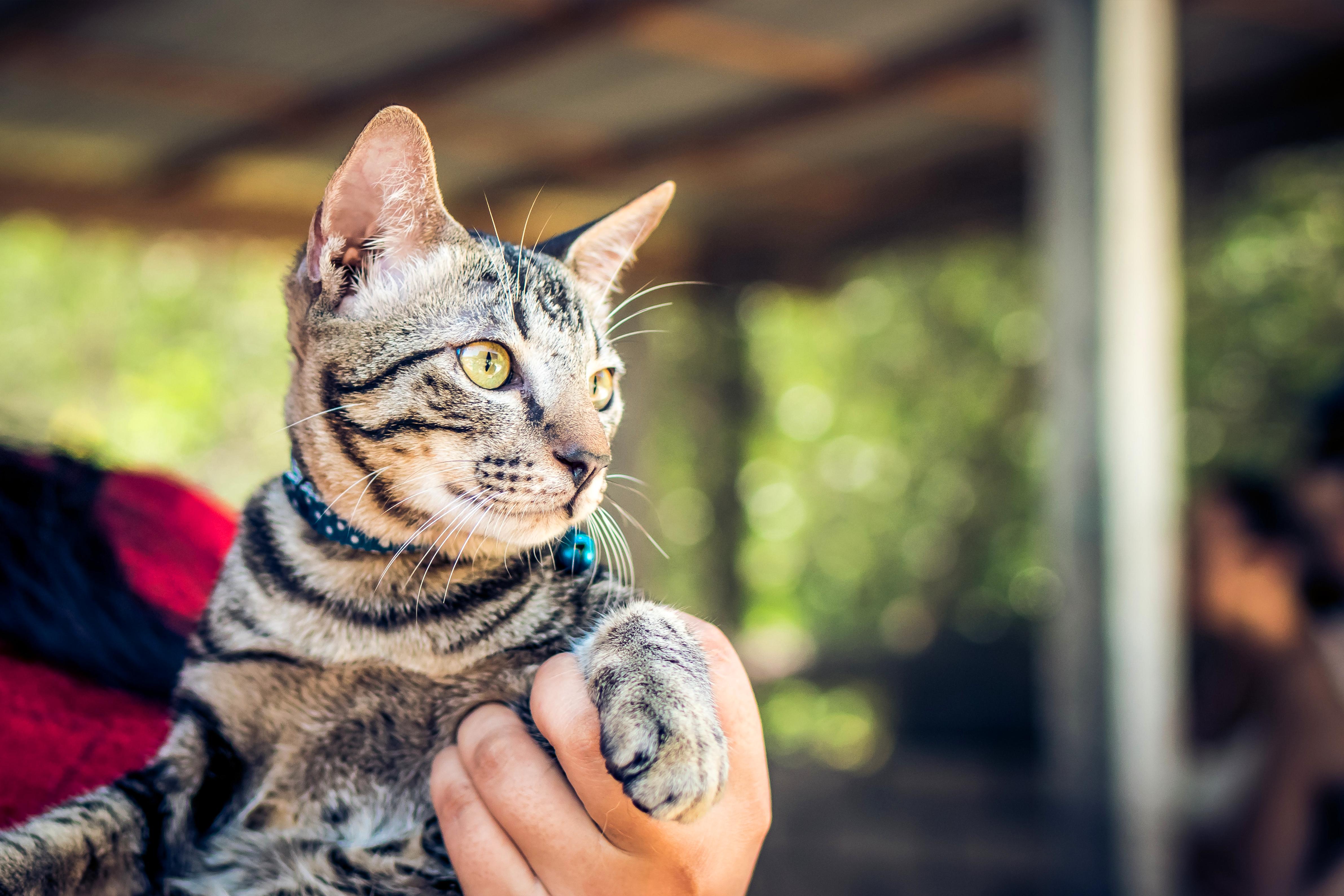 i-benefici-di-avere-un-animale-in-casa