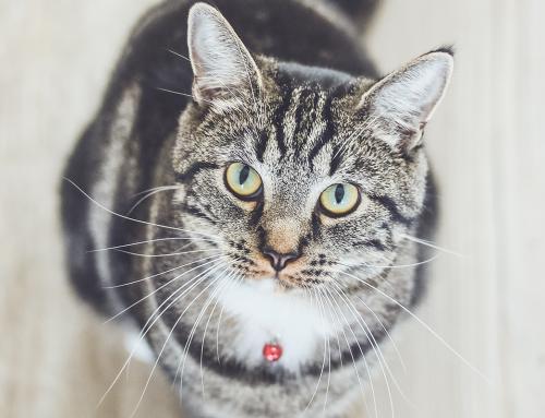 Secco ItalianWay: ingredienti speciali per il tuo gatto