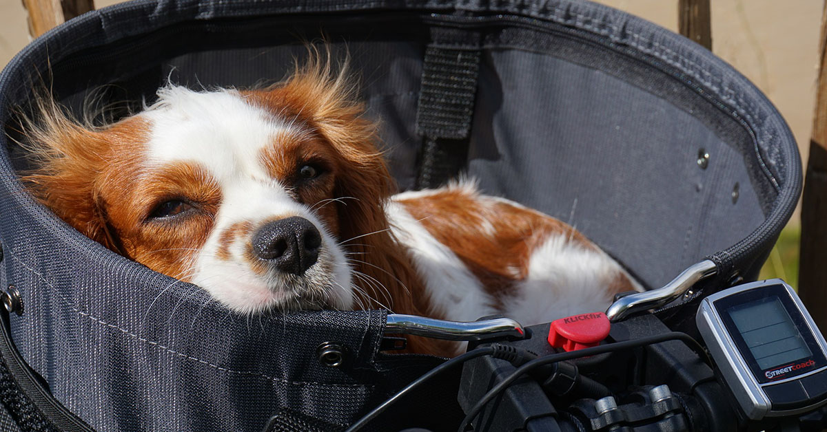 Come sfruttare la bicicletta con il nostro cane