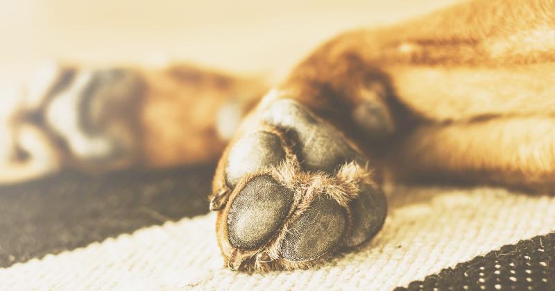 Asfalto bollente- proteggere le zampe del cane d'estate