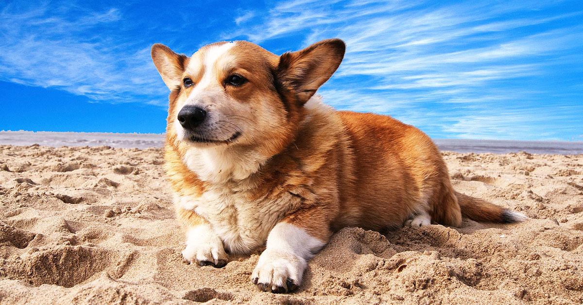 Andare al mare con il nostro cane