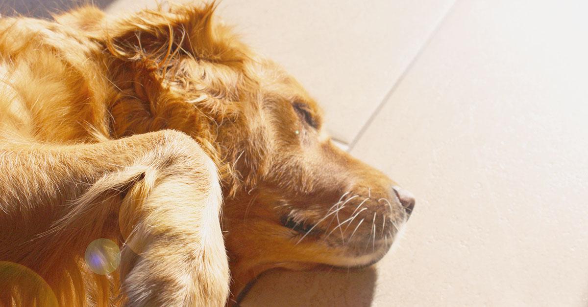 Proteggere il cane dalle punture di zanzara