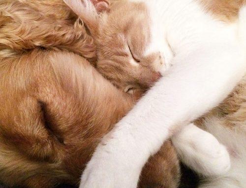 Cane e gatto in appartamento: convivenza difficile?