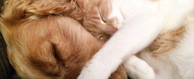 Cane e gatto in appartamento- convivenza difficile?
