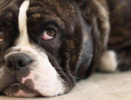 Perché i cani hanno paura dell'aspirapolvere?