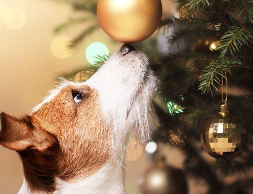 Come fare l'albero di Natale a prova di cane