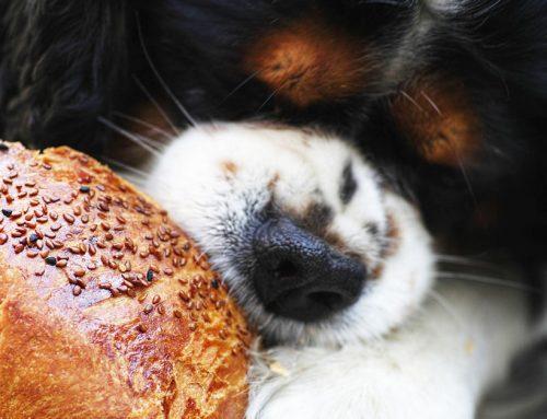 Natale in tavola: i cibi da evitare per cani e gatti