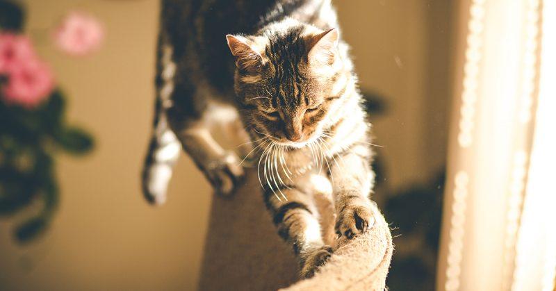 Perché il gatto si lima le unghie sui mobili?, Perché il gatto si lima le unghie sui mobili?