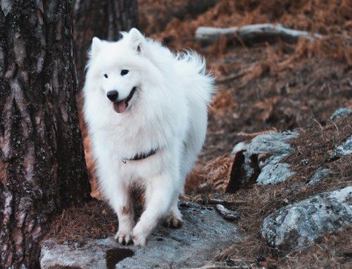 Cosa fare se il cane scappa?