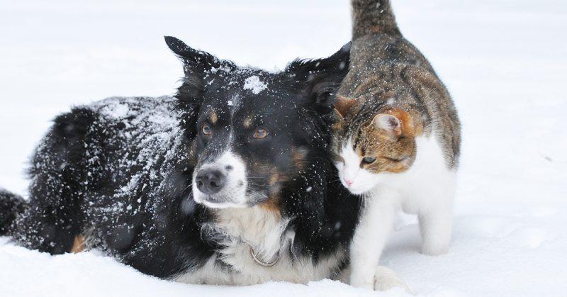 L'alimentazione invernale, L'alimentazione invernale indicata per cani e gatti