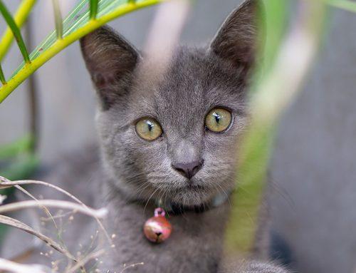 Cosa cerca il gatto fuori casa?