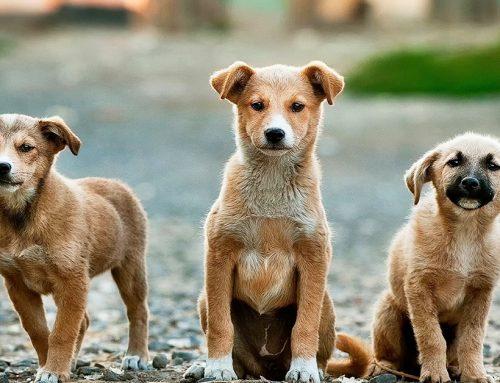 Cosa sapere prima di adottare un cane dal canile